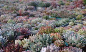150种多肉植物图片名称大全