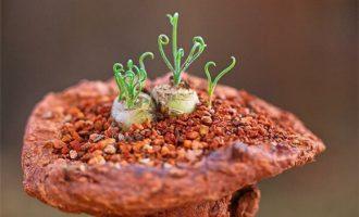 十二卷多肉植物怎么养,来看看养殖十二卷的一些经验吧