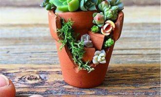 盆栽荷花不开花的原因及解决办法