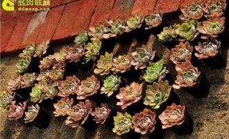 浇水过量,容易造成盆栽植物烂根死亡