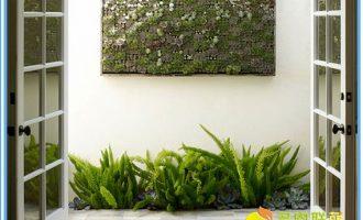 金枝玉叶植物造型(多图)