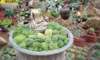 盆栽兰草怎么养,兰草的养殖方法和注意事项/喜散光忌强光