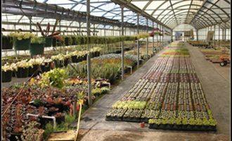 植物对光线的改变,需要一定的适应期