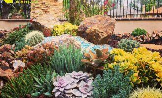 月季盆栽的修剪方法及注意事项