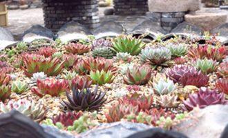 仙人掌盆景种植方法