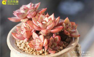 如何判断花卉盆栽的养护是否正常合理