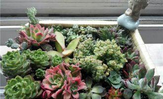 盆栽芍药花怎么浇水