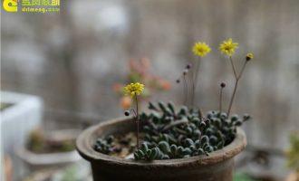 兜兰的有哪些不同的品种 带叶兜兰美丽兜兰9种不同品种图片
