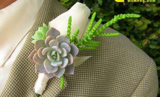 5种有效吸甲醛植物,新房装修必备!