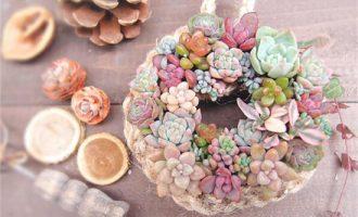 牡丹花有多少品种,牡丹花的品种与图片大全/绣球牡丹最美