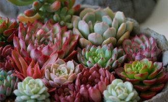 你用什么样的花盆养花?这五种花盆的特性来了解下
