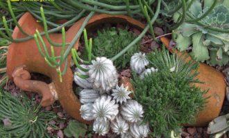 绿萝剪枝水培方法