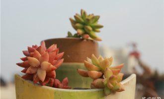 从叶片就能知道花卉植物喜阴喜阳