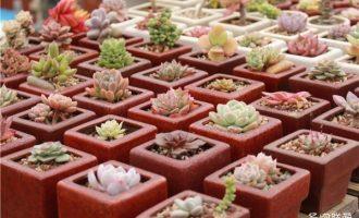 耐干燥的植物花卉有哪些品种