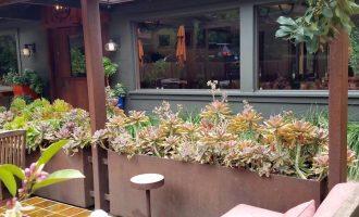 适合摆放在阳台且具有风水生旺作用的植物