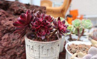 冬天需要防冻保暖的花卉植物有哪些