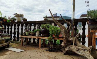 鹿角海棠的养殖方法,鹿角海棠病虫害防治