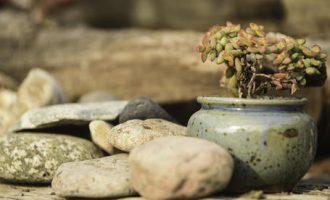 厨房植物摆放的风水讲究