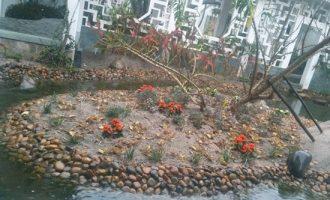 养殖栀子花盆景怎样浇水
