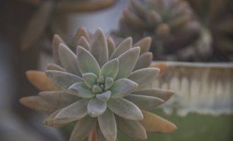 什么是酸性土和碱性土,它们分别适合种植什么花卉