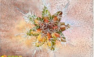 春季和秋季是最适合多肉植物播种的季节