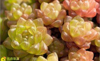 绿萝施肥需施什么肥料