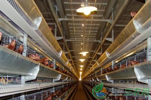 肉鸡塑料养殖大棚的特点及建设技术