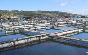水产养殖 池塘养鱼鱼种饲养管理技术