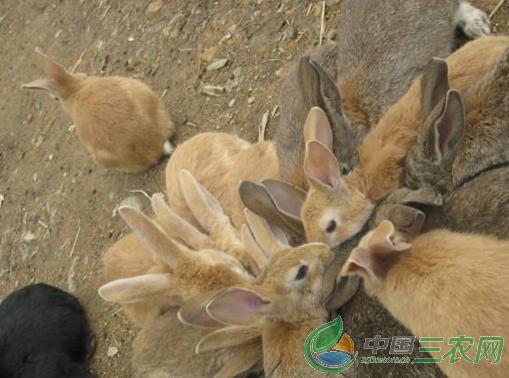 """""""野兔养殖前景十分看好"""