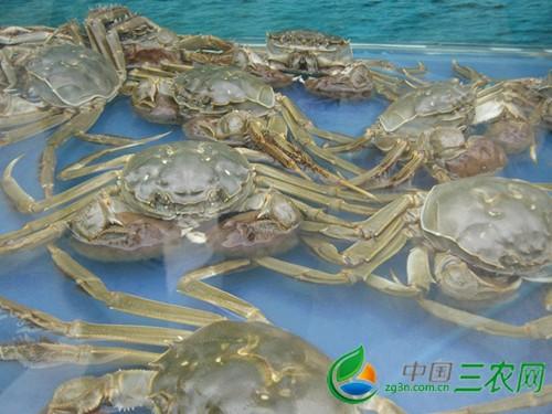 咸宁水产部门组织渔民抗灾鱼池过半已恢复生产