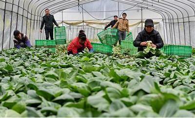 福建省首个智慧农业体验谷项目在延平区落户