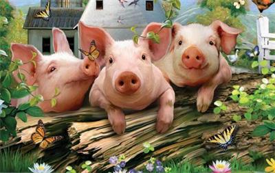 养猪业:资本的扩张、农民的利益如何拿捏得当