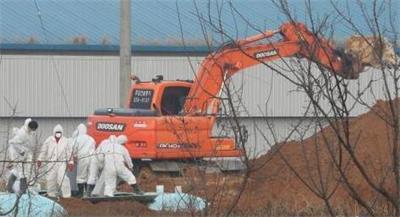 济州出现高致病性禽流感病毒 韩国下达家禽禁运令