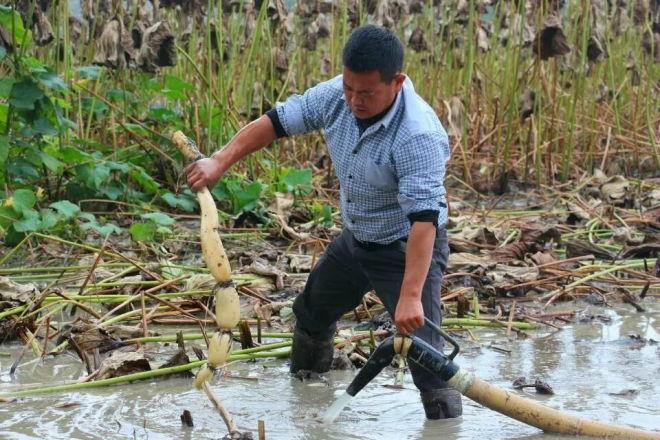 返乡农民工搞起水产养殖