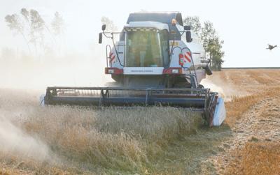 俄罗斯粮食产量逆袭创新高
