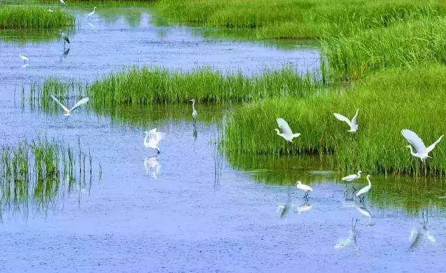 今年所有省份完成湿地保护方案