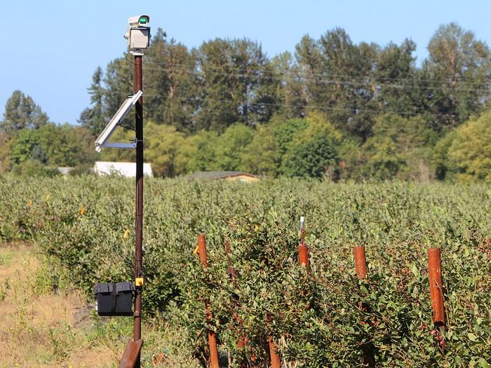 美国农民通过向鸟类射击激光来拯救他们的庄稼