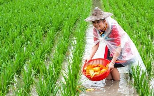 吉林省稻渔综合种养面积达46万亩