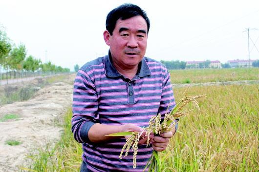 水洗盐碱地种出有机大米