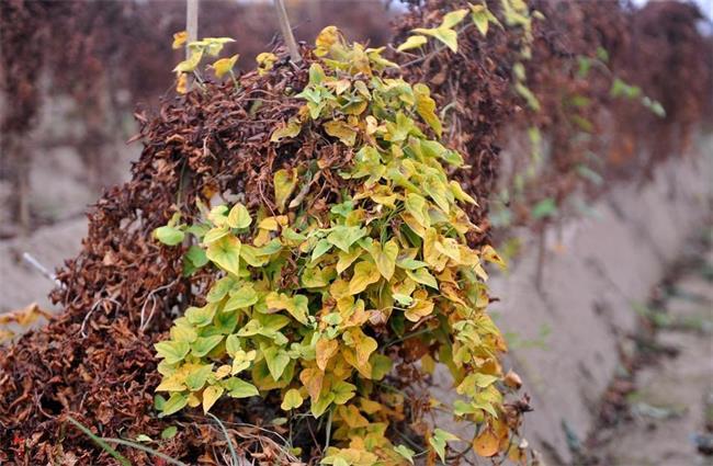 秋天田野里的10种农作物