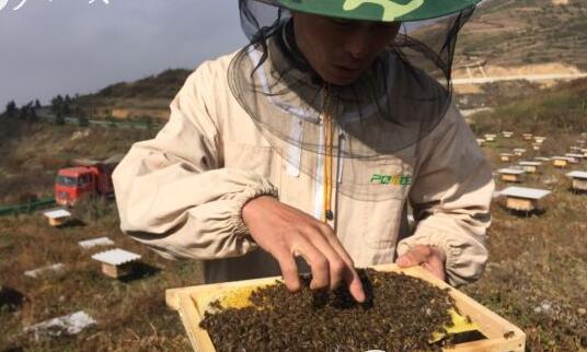 发展山地特色蜜蜂养殖