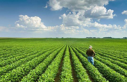 美国大豆业与中方签署两份意向书