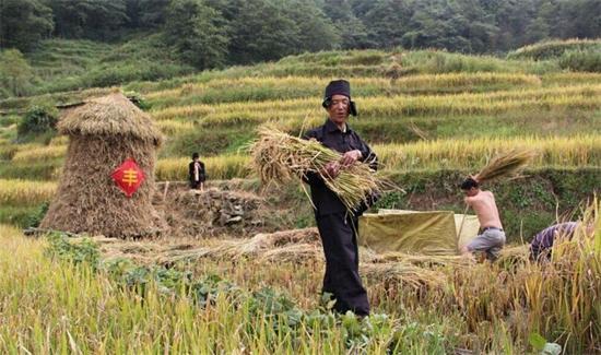 双1120款农产品卖了4.5亿元