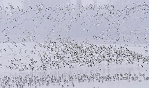 洞庭湖拆除迷魂阵渔网