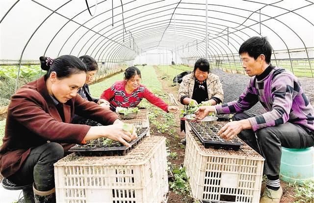 让土地成为农民增收致富的资产