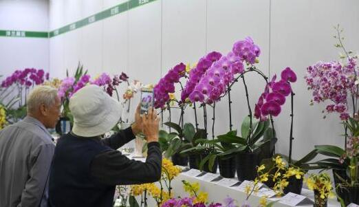 两岸农博会·花博会福建漳州开幕