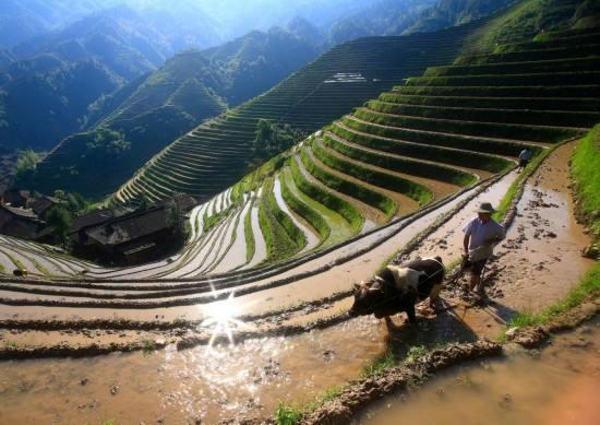 全国农业农村经济继续向好