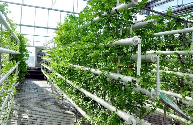 到2050年生态农业有望成为确保粮食安全的新方式