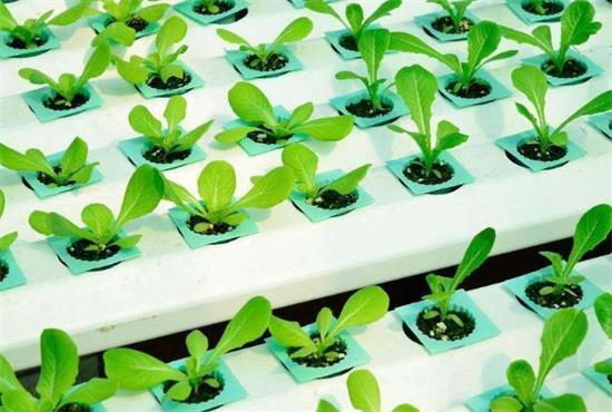 湖南出口示范区带动农产品质量提升
