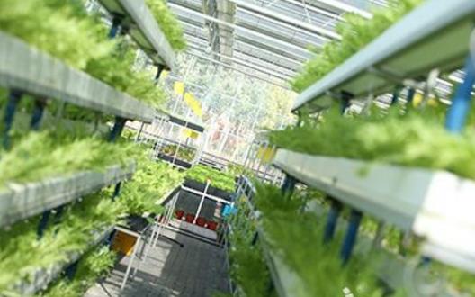 南京智慧农业发力远程指导养殖